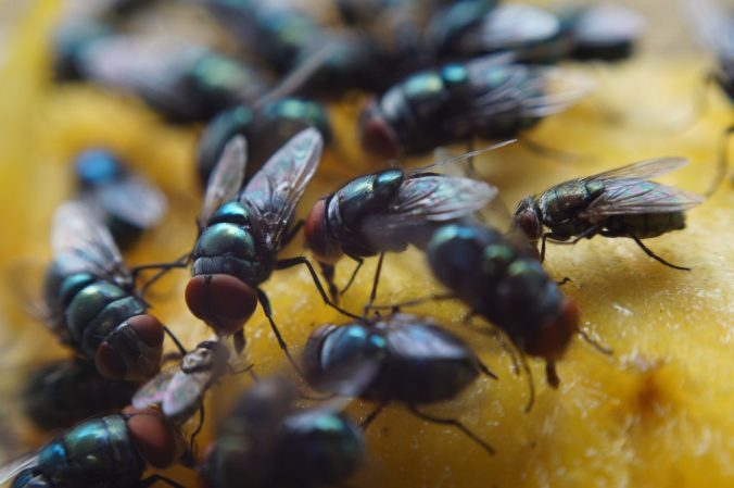 Multiple-flies-on-bread-image-1024x681