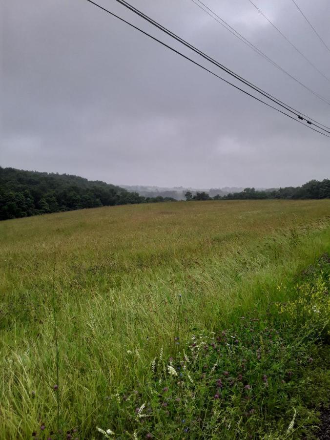 lush fields